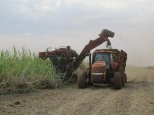 Sugarecane_Harvest small