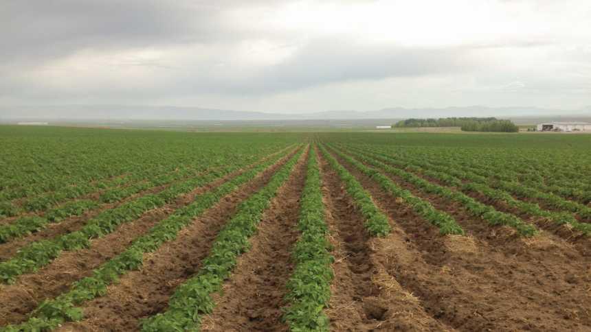 The Next Frontier Potato And Precision Agriculture Precisionag