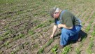 Farmer Brad Hagen inspects cover crops