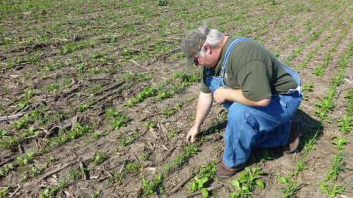 Farmer Brad Hagen inspects cover crops