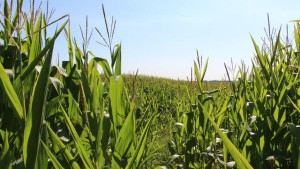 Crop Pro Insurance Closes $8 Million in Series A Funding
