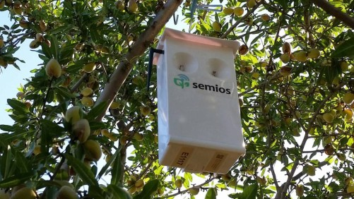 Semios Sensor in Tree