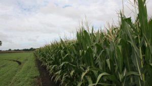 Precision Irrigation Company Hortau Makes THRIVE Top 50 Growth Rankings