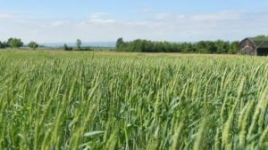 Precision Agriculture The Focus At Cornell Field Day