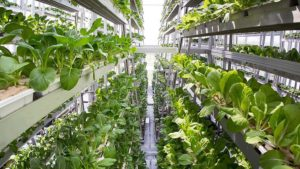 Vertical Land Farming? A Bust. Vertical Ocean Farming? The Next Frontier.