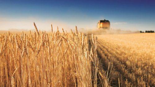 Australian Harvest