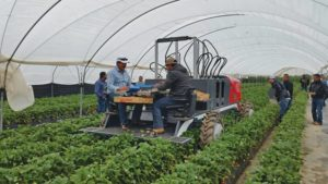 Precision in Specialty Crops Gains Momentum