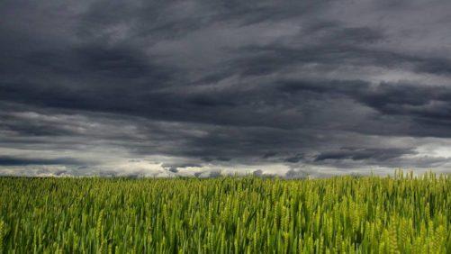 Dark Clouds Field