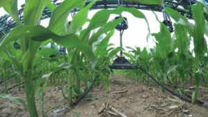 Split Nitrogen Application: Where The 4Rs Get Real