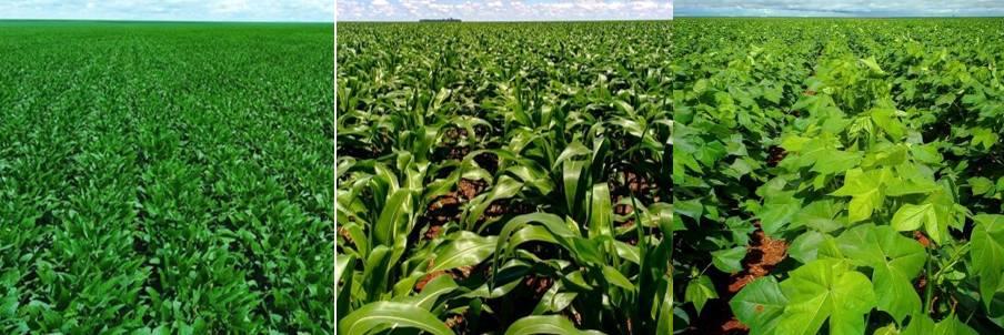 Soybean cotton corn Brazil