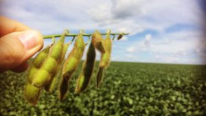 Precision Agriculture Helps Brazilian Farmers Top 90-Bushel Soybean Yield