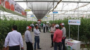 2017 International Tomato Congress Features Ag Tech Session