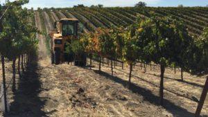 Mechanization Key to the Future of Vineyard Management