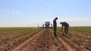 Blue River, Deere Deal Will Accelerate Farm Robot Innovation