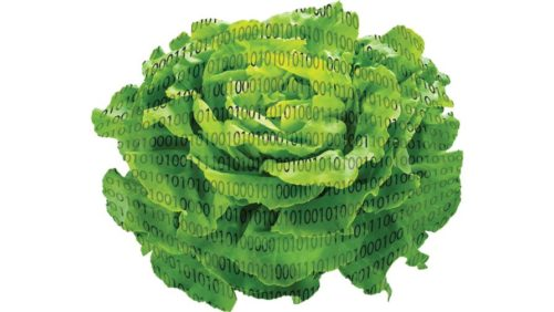Lettuce-with-a-binary-code