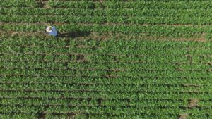 Agricultural Drones in Brazil: A Look at Training and Practical Use
