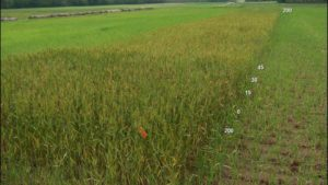 Use of Reference Strips to Determine Nitrogen Fertilizer Requirements