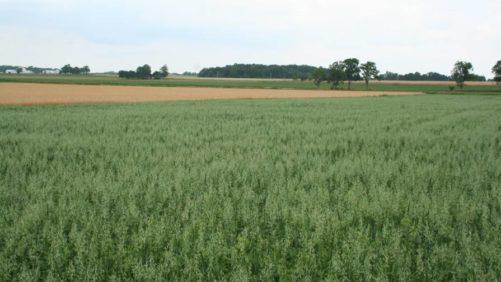 Wheat-an-oats-Daniel-X-ONeil
