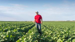 Willness: Building VRA Fertility Zones on Plant Biomass Alone is Short-Sighted