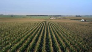 Seeing is Believing in Precision Agriculture: A Tale from the Field of Common Sense