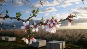 Why Virtual Sensors Could Save California's At-Risk Almond Yields