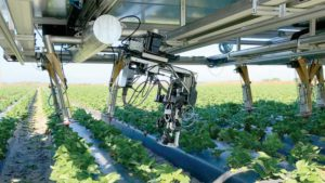 Specialty Crops: Get in Gear Now for Agriculture's Robotic Revolution