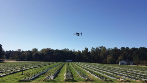 PrecisionHawk-drone-flies-over-strawberry-field