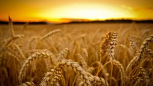 Are You Ready for This Year's Digital Harvest?
