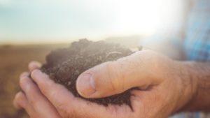 Soil-Hand