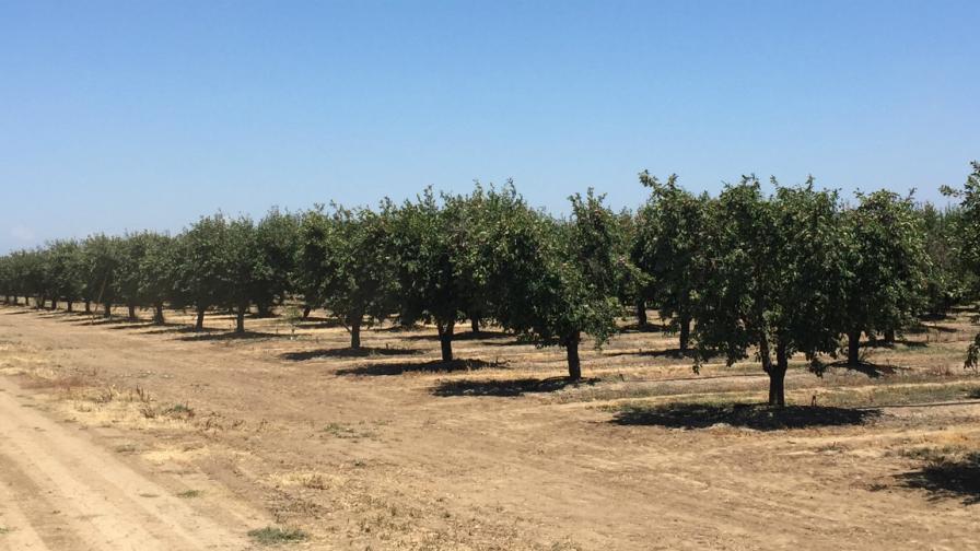 Pix4Dfields_usecase_prunes_farm