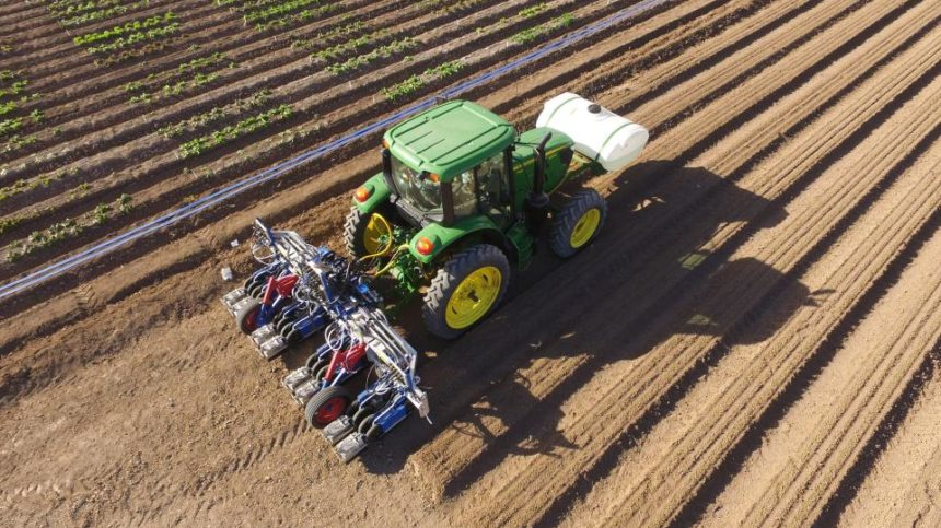 Lettuce Thinning Goes Automated with New Machines