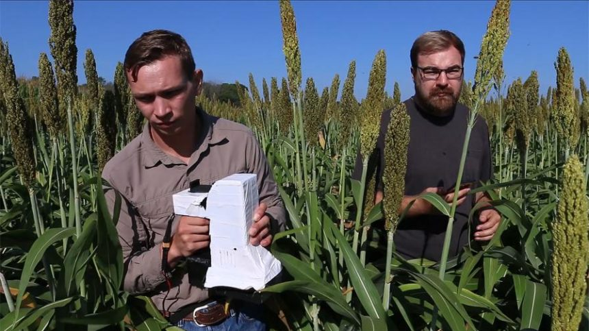 Agricultural Intelligence: Sensor Gives Farmers More Accurate Read on Plant Health