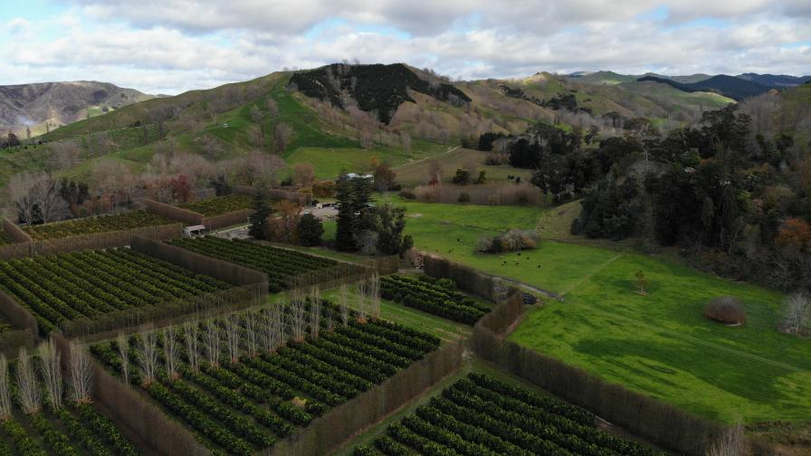 3 Major Challenges Facing Digital Agriculture in New Zealand